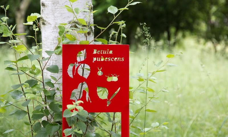 Panneau de signalétique devant l'arbre Betula pubescens