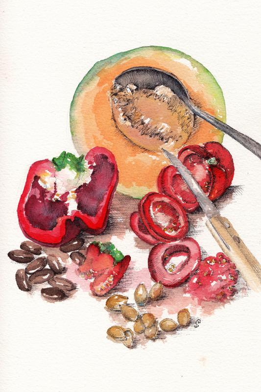 """Aquarelle pour l'article """"Cueillette d'automne"""" qui explique comment récolter ses graines, et les conserver chez soi."""