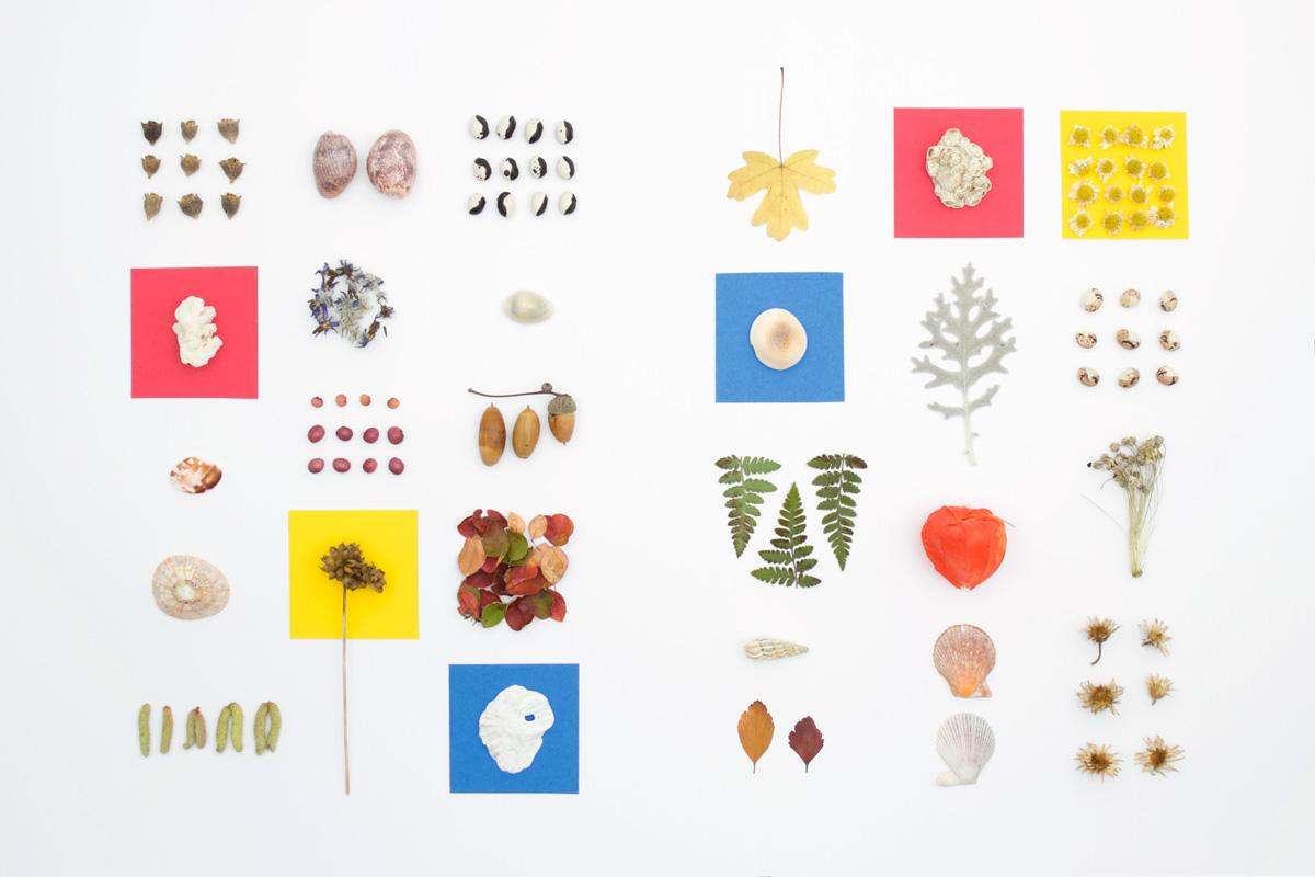 Présentation d'une petite collection d'éléments ramassés dans la nature : graines de tétragone, coquillages variés, physalis, fougères, etc.