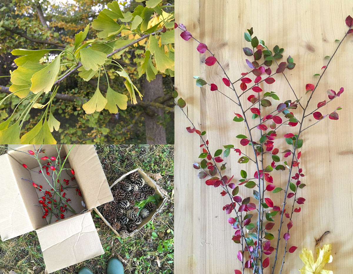 Image composée de 3 photos, représentant des feuilles de ginkgo, des pommes de pin, des églantines, et des petites feuilles multicolores.